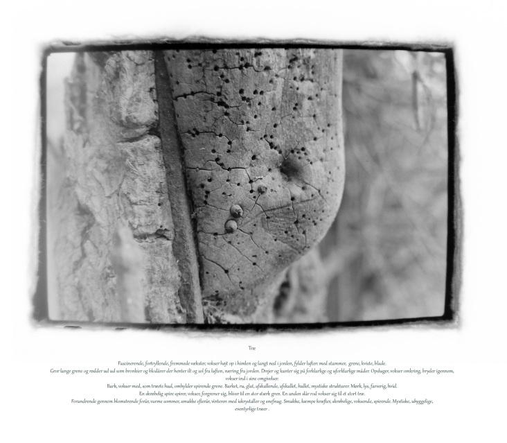Træ huller jern TEKST - Kopi